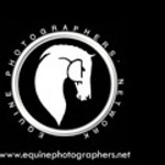 Member of the Equine Photographers Network