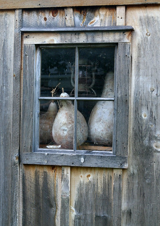 Gourds in Window. John Athearn's garden shed, Music Street, West Tisbury.<br /> <br /> September 25, 2006.