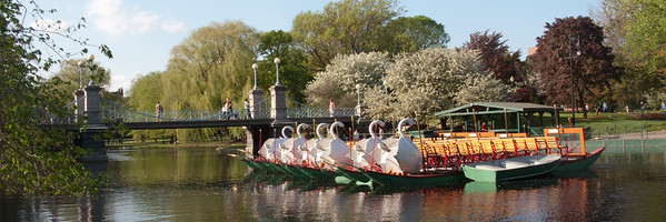 May 8, 2009.  Swan Boats, Boston Public Garden, tethered and waiting.