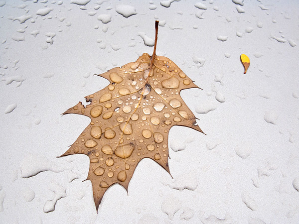 November 5, 2010. Dedham, Massachusetts, clearing after two days of rain; oak leaf on hood of Honda CRV.