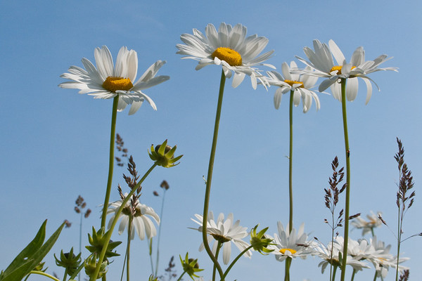 June 7, 2009. Daisy time. Falling-in-love time.