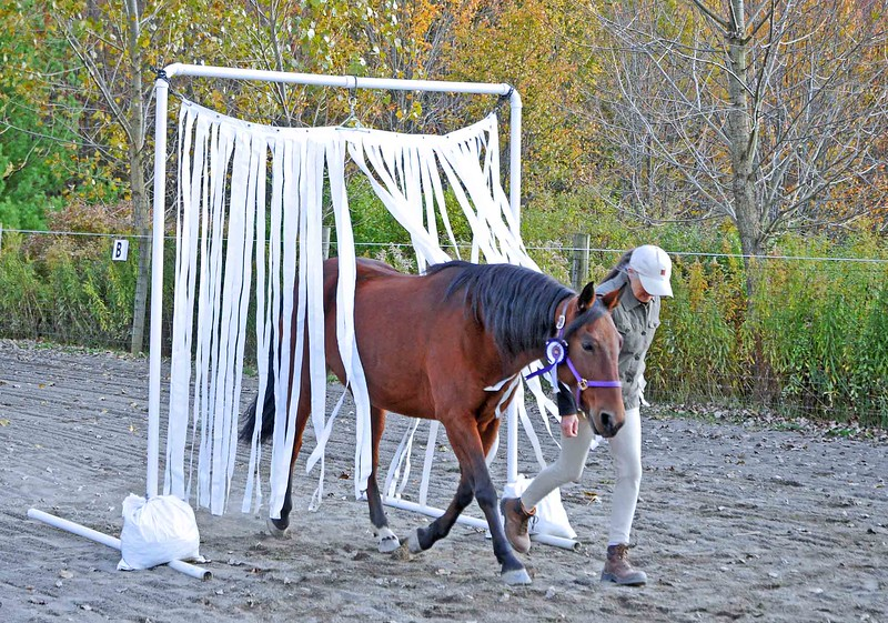 New York's First Competition Agility Horse