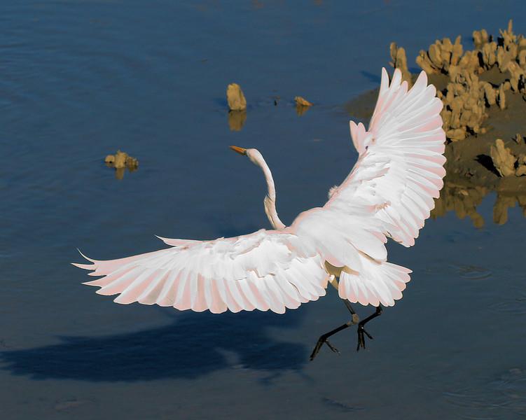 Egret Landing at Huntington Beach State Park