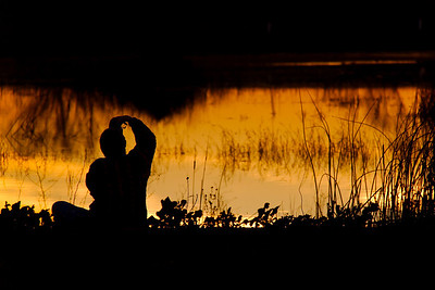 Shooting The Last Light Yolo Basin, Yolo County, CA, US