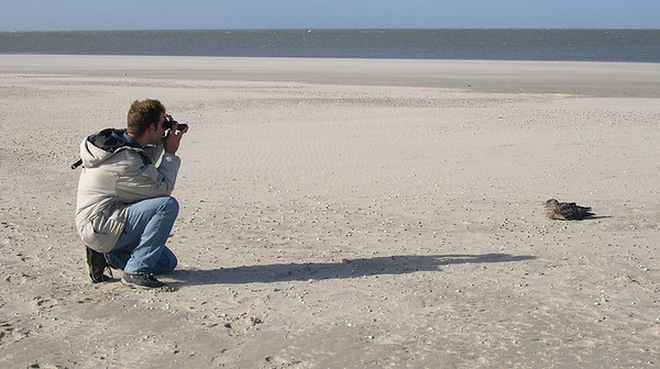 Observing a Great Skua on the island of Texel, The Netherlands. Photo taken by Huub Lanters.