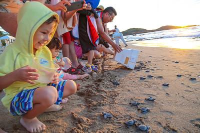 Turtle Release in Mazatlan