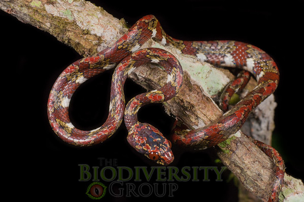 Biodiversity Group, _DSC5522