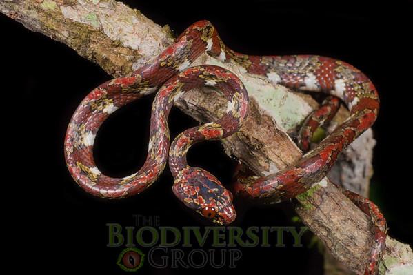 Biodiversity Group, _DSC5522