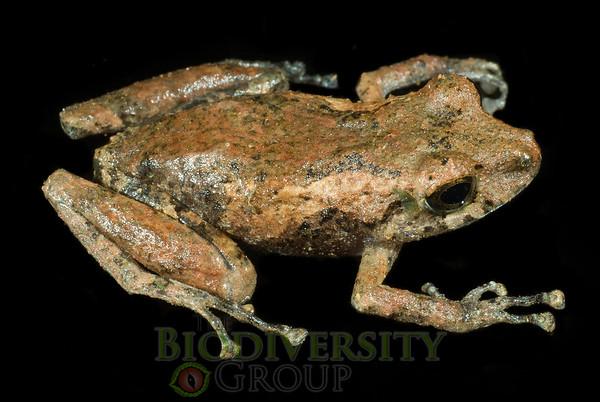 Biodiversity Group, DSC00586