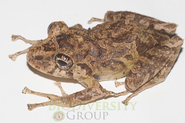 Biodiversity Group, IMG_9379