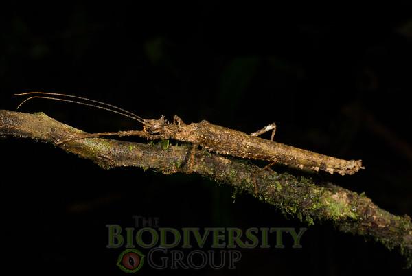 Biodiversity Group, DSC04781