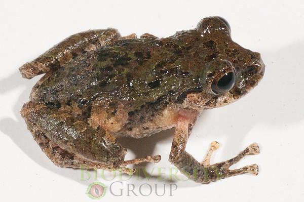 Biodiversity Group, _DSC5672