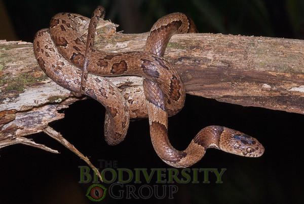 Biodiversity Group, _DSC5427