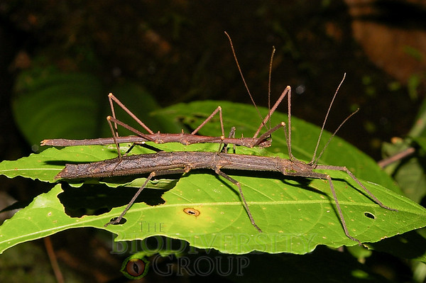 Biodiversity Group, IMGP1619