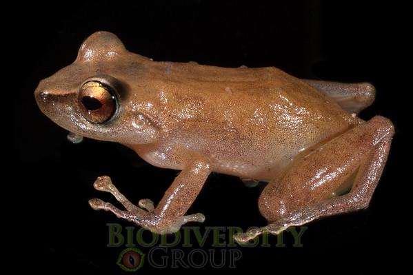 Biodiversity Group, _DSC4742