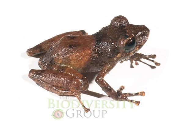 Biodiversity Group, _DSC5251