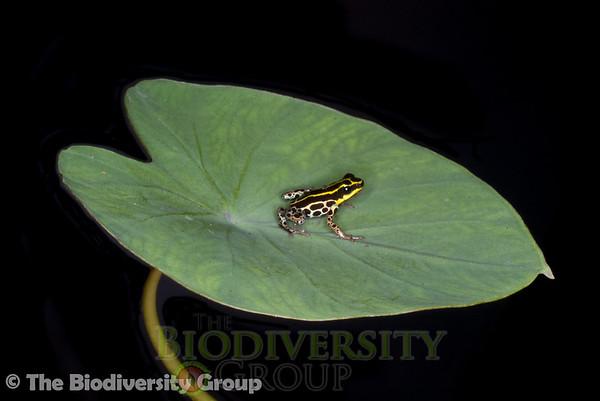 Biodiversity Group, IMGP8239