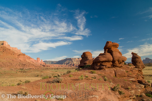 Biodiversity Group, PICT4352