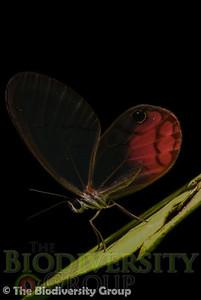 Biodiversity Group, _DSC7133