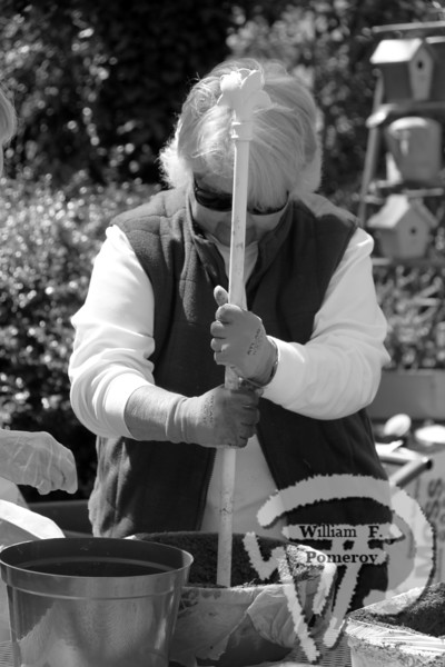 Antiques and attic treasures will be priced to sell at the  flea market. Bring your garden tools and non-serrated knives  to be professionally sharpened for a small donation. A master  gardener will be available to answer questions. The bake sale  and raffle add to the fun.  Proceeds support the Garden Club's  many projects around Harwich:  'Bloomin' Barrels,' civic  gardens, Christmas wreaths, scholarships, G-Litter  campaign and many more.Helen Duarte inserts a hole at the bottom  of her hypertufa pot.  Harwich Oracle MAY 22, 2013page 3