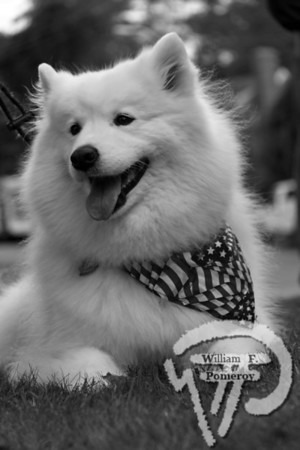 CAPE COD PETSyour pet photosKrystal,samoyed,Brewster FALL 2010  CAPE COD PETS page 18