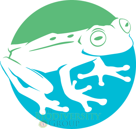 Solid White frog_transparency