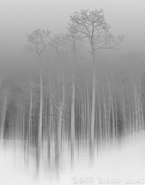 Vanishing Wilderness, Routt County, Co, 2009_smugmug