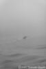 Into the Fog, Venice,IT, 2017