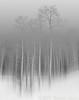 Werner-Bernard_Disappearing Wilderness