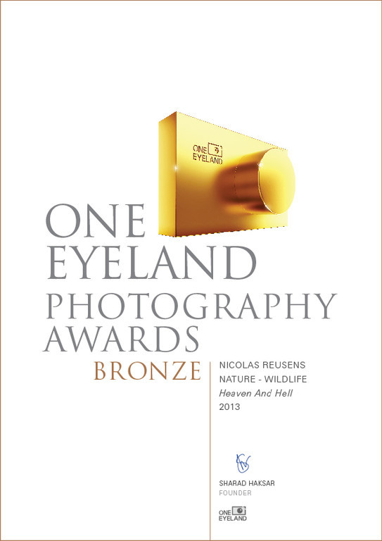 Third place One Eyeland Photo Contest