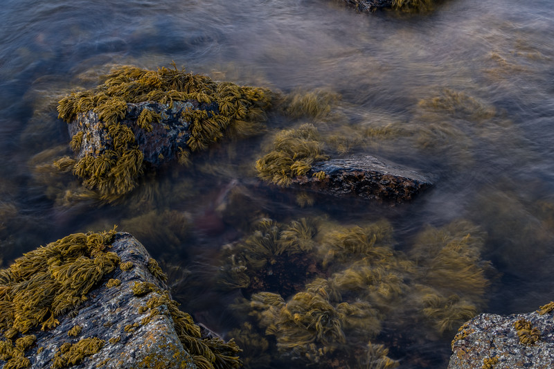 Fifeness, shallow seaweeds