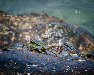 Crabs, Hawaii