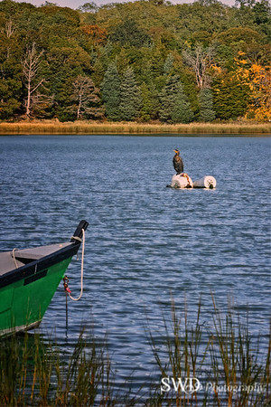 Cormorant resting on a fall afternoon.