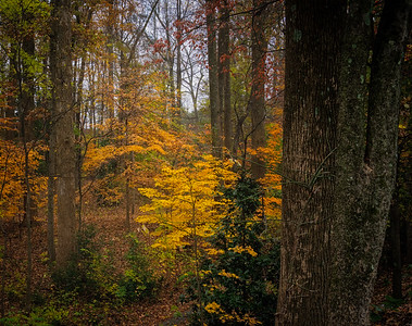 Fall in the Woodlands