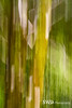 Moss on a Birch Tree - Intentional Camera Movement