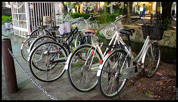 Kyoto is a flat city. Bicycles everywhere.  Walking by Gion 4th April 2013 Kyoto