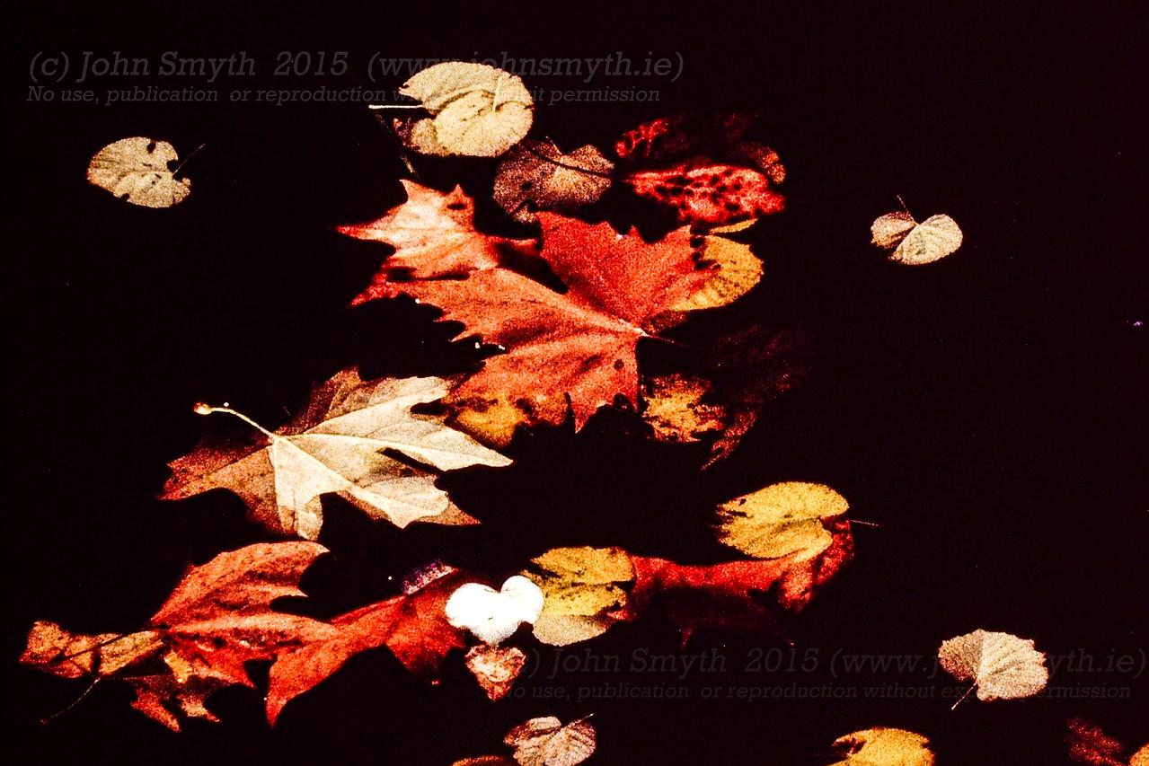 Fallen Leaves, Paris, Autumn 2001