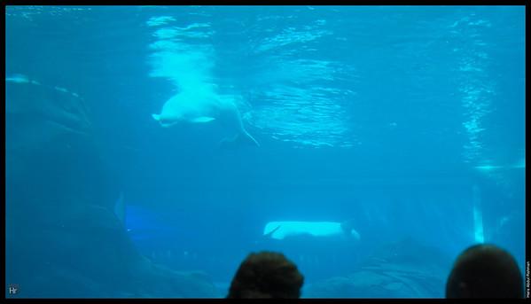 121207 Georgia Aquarium 18