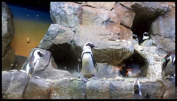 121207 Georgia Aquarium 21