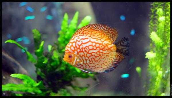 121207 Georgia Aquarium 10
