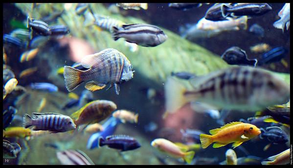 121207 Georgia Aquarium 12