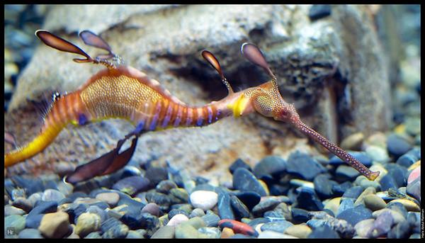 121207 Georgia Aquarium 19