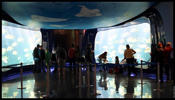 121207 Georgia Aquarium 5