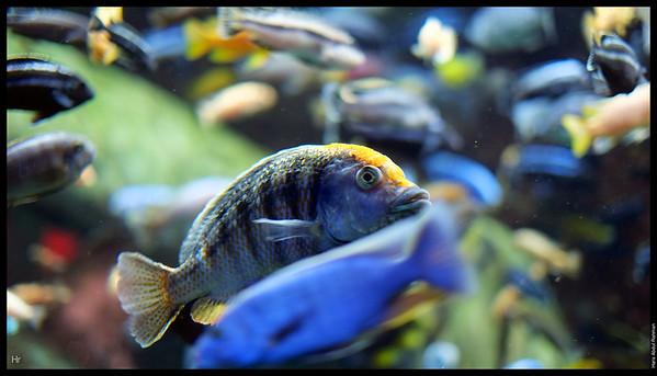 121207 Georgia Aquarium 13