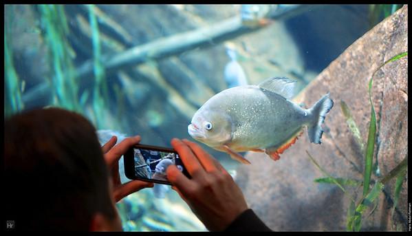 121207 Georgia Aquarium 16