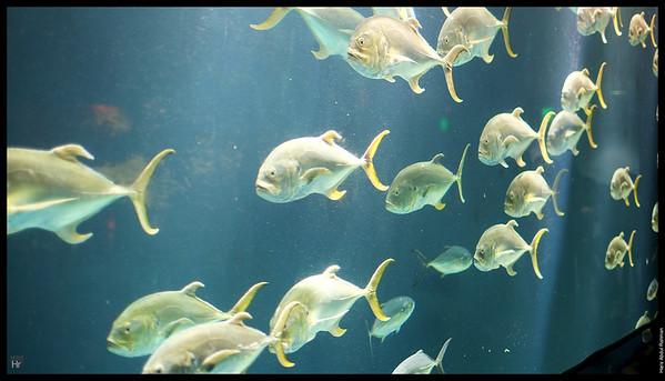 121207 Georgia Aquarium 6