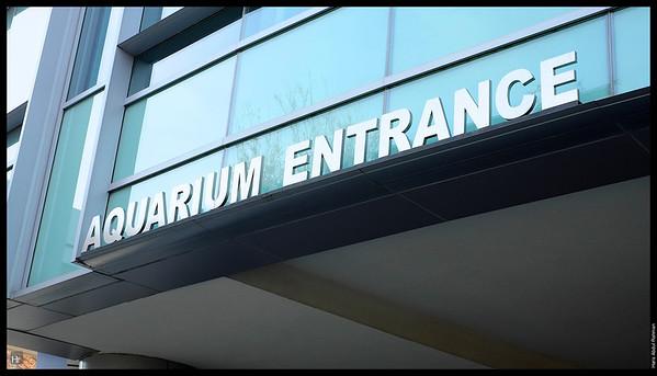 121207 Georgia Aquarium 3