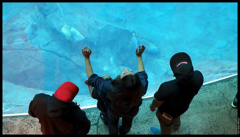 121207 Georgia Aquarium 23