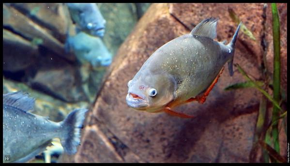 121207 Georgia Aquarium 17