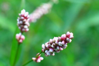 Wellington Fruit Farm 4 - Wild lavender